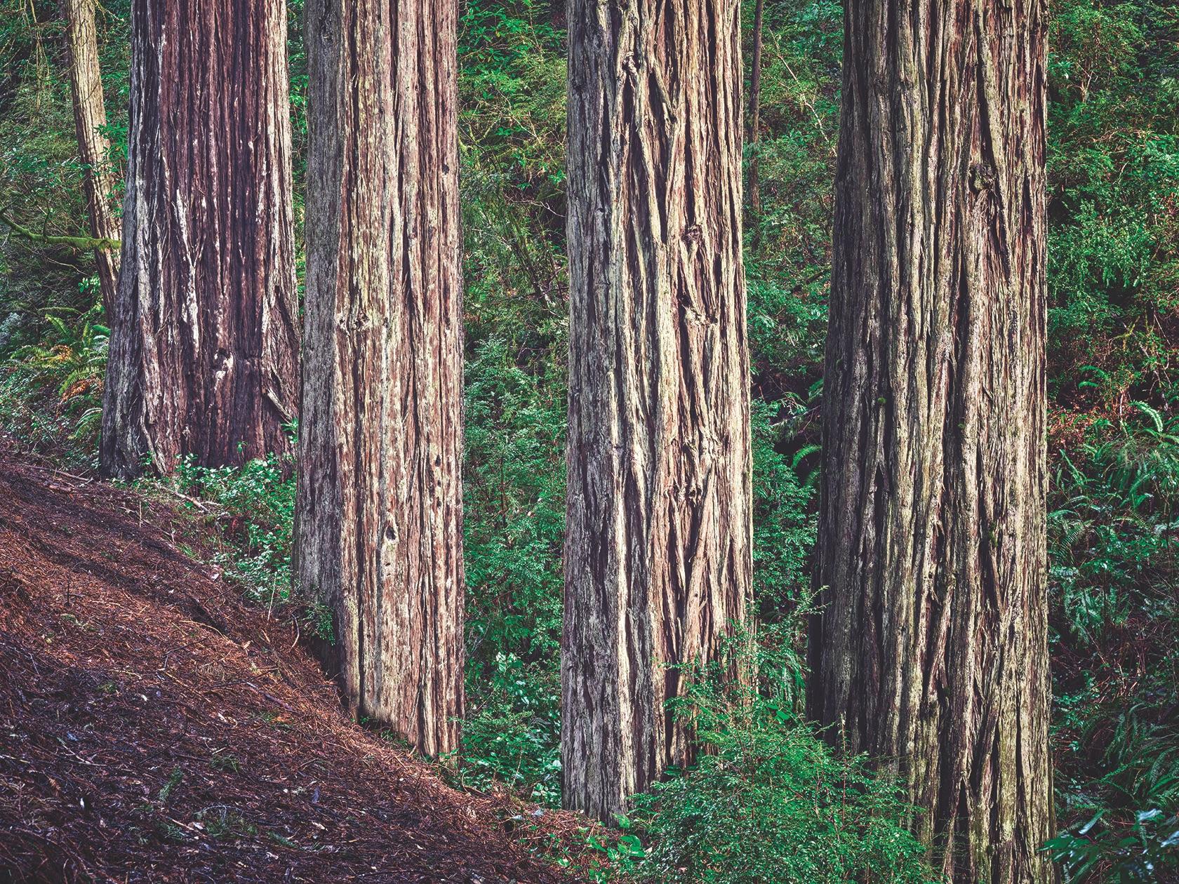 Nocal Oregon Coast