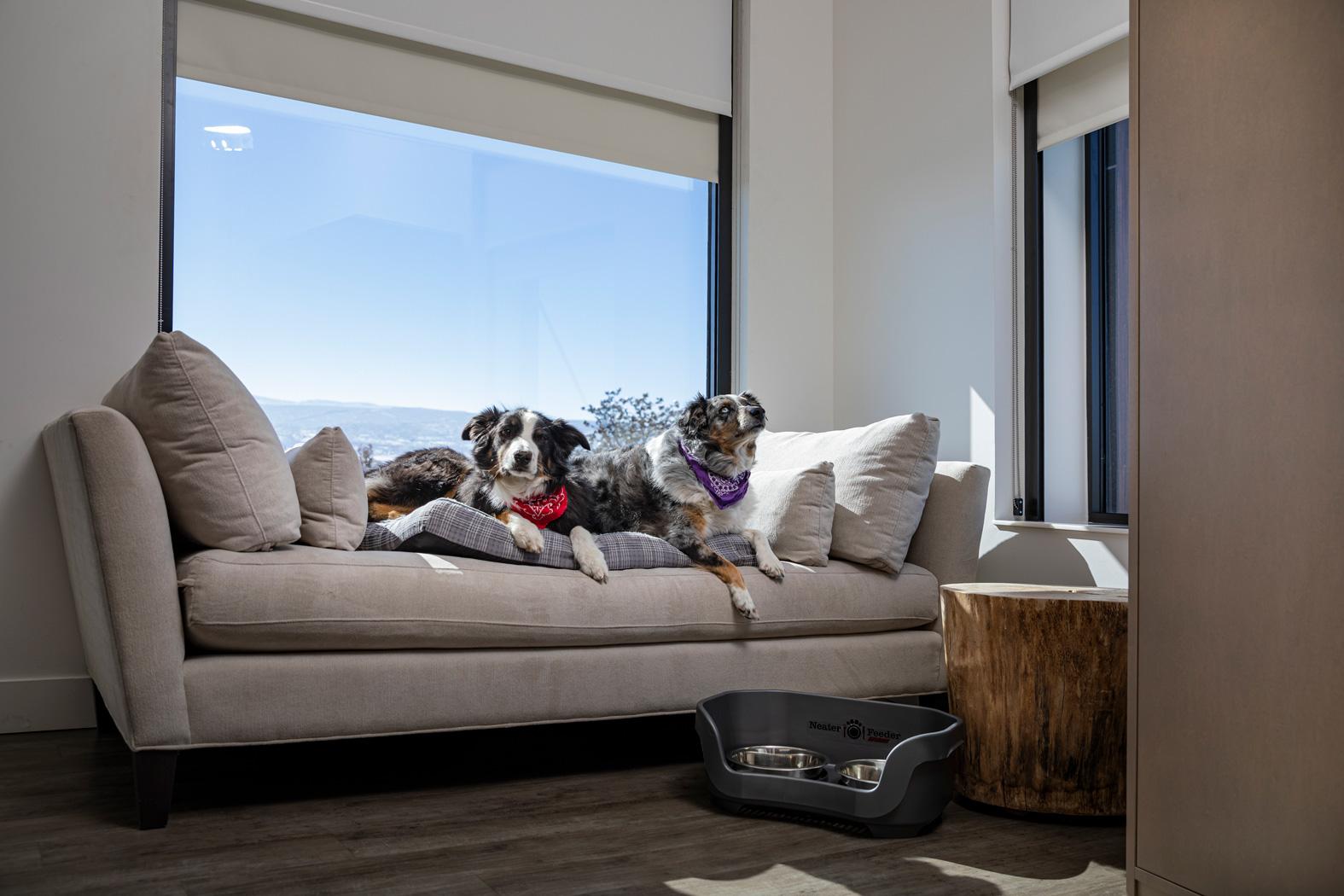 The Hotel Maverick Dog Friendly Courtsey Photo
