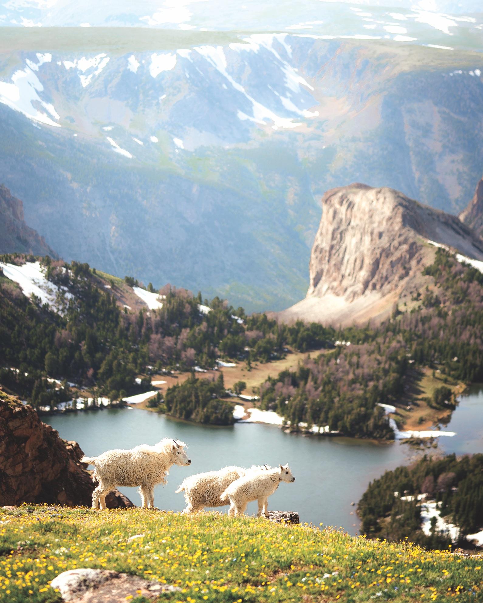 Destination Mtn Goats