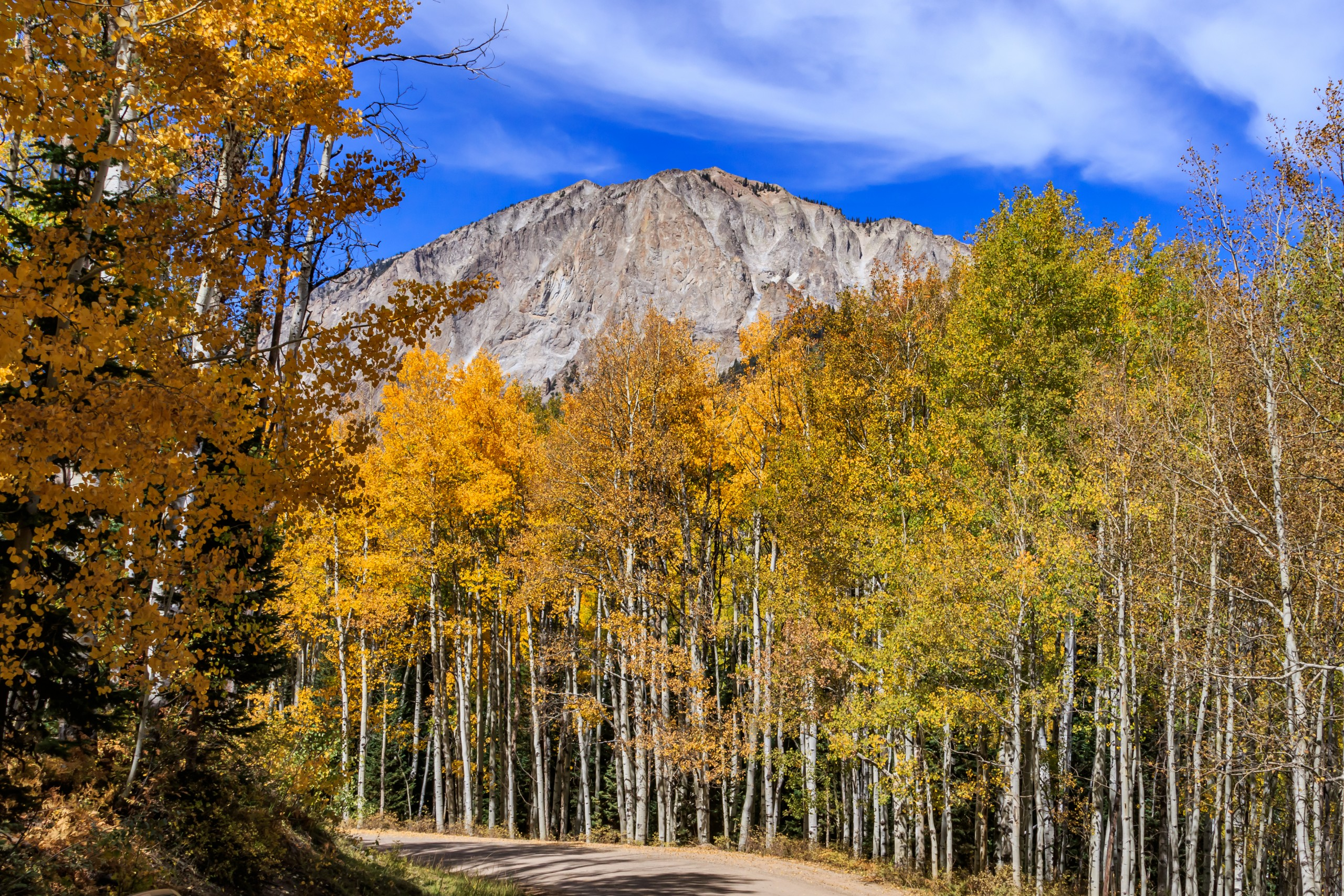 Aspen,forest,and,autumn,scenery,in,kebler,pass,,gunnison,county,